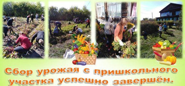 Cбор урожая